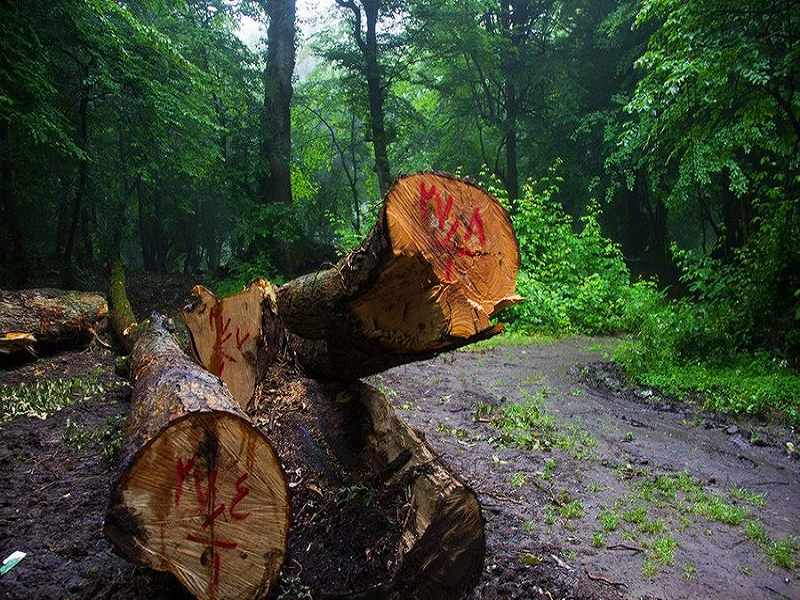 قطع درختان و فرآیند تولید کاغذ