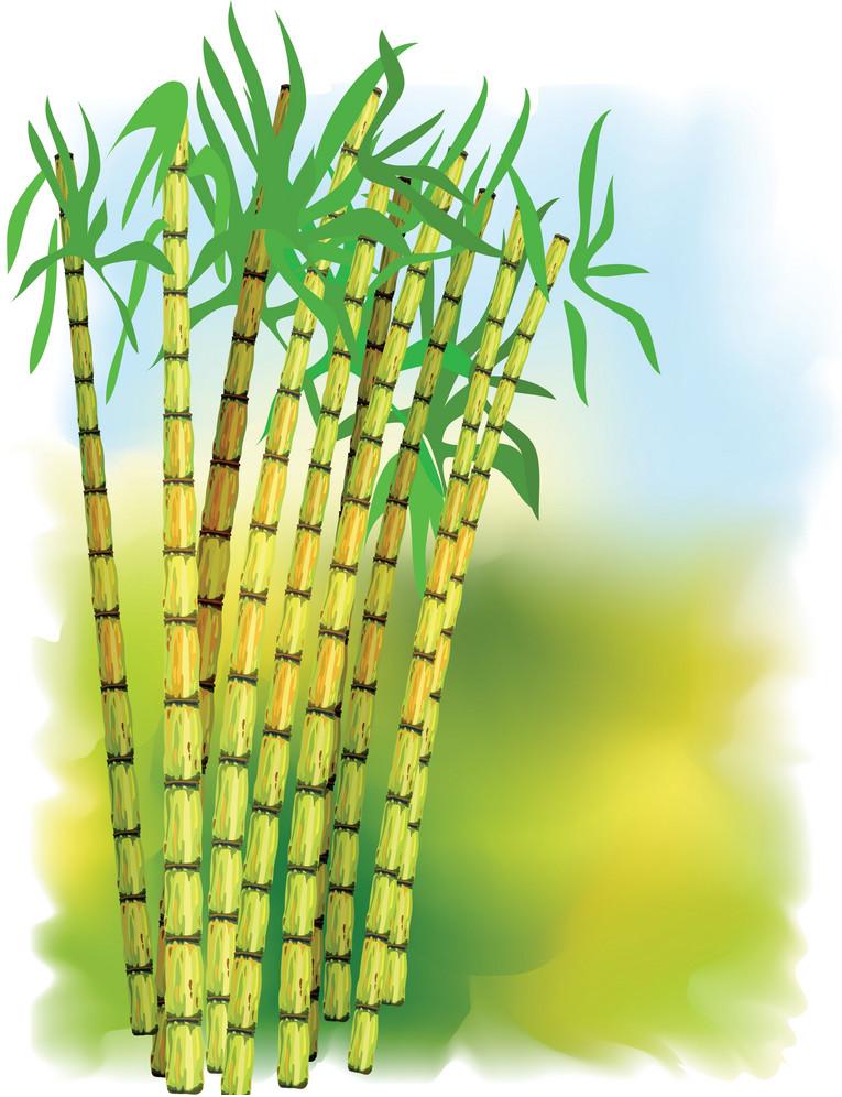 ساخت کاغذ با الیاف گیاهی