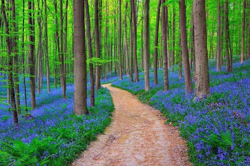 جنگل هایی زیبا با استفاده از کاغذ محیط زیستی HiTree