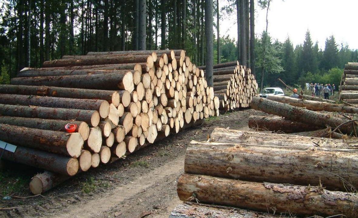 قطع درختان برای تهیه کاغذ